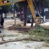 Bandırma Belediyesi'ne  Ağaç Tepkisi