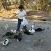 Emekli Hemşire Sokak Kedilerine Sahip Çıktı