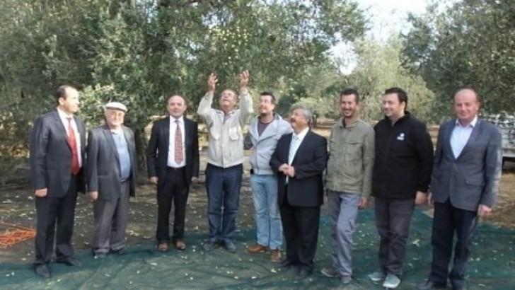 Burhaniye'de Belediye  Zeytinleri İhaleye Çıktı