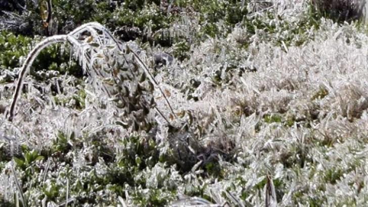 Meteorolojiden Zirai Don ve Buzlanmaya Karşı Uyarı