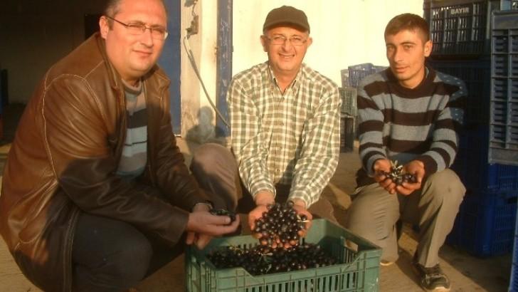 Burhaniye Tariş'de Rekolte Beyan Dönemi Başladı