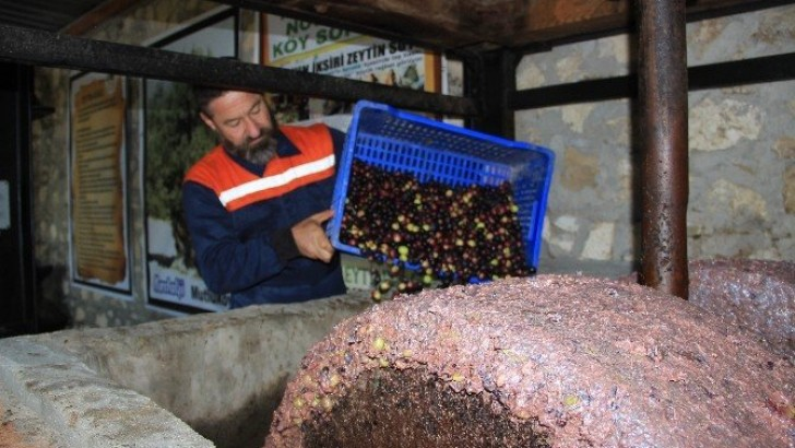 200 Yıllık Taş Baskıda  Zeytin Sütü Üretiyor…