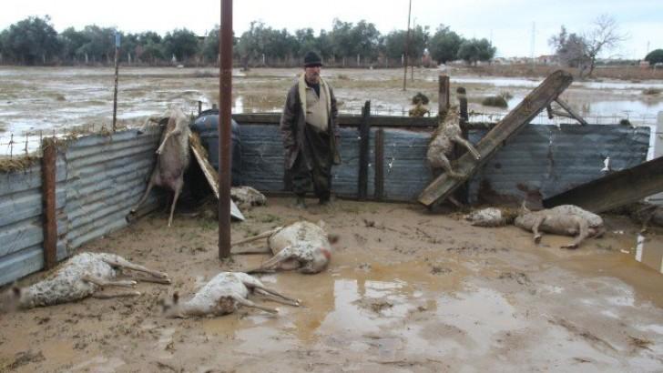 Ayvalık'taki Selde 800 Hayvan Telef Oldu