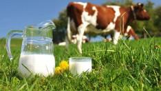 Eylül ayında 772 bin 552 ton inek sütü toplandı