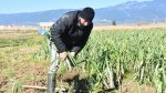 Edremit'te tarımsal hizmetler ile yüzler gülüyor