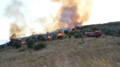 Çoban Ateşi Ormanı Yaktı