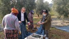 Selim Panç'tan Zeytin Üreticilerine Ziyaret